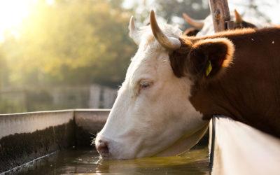Bienestar Animal: en qué consiste y cómo se legisla y aplica en la UE y España