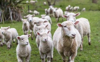 Proyecto Welfare Quality, la respuesta europea al desarrollo del bienestar animal