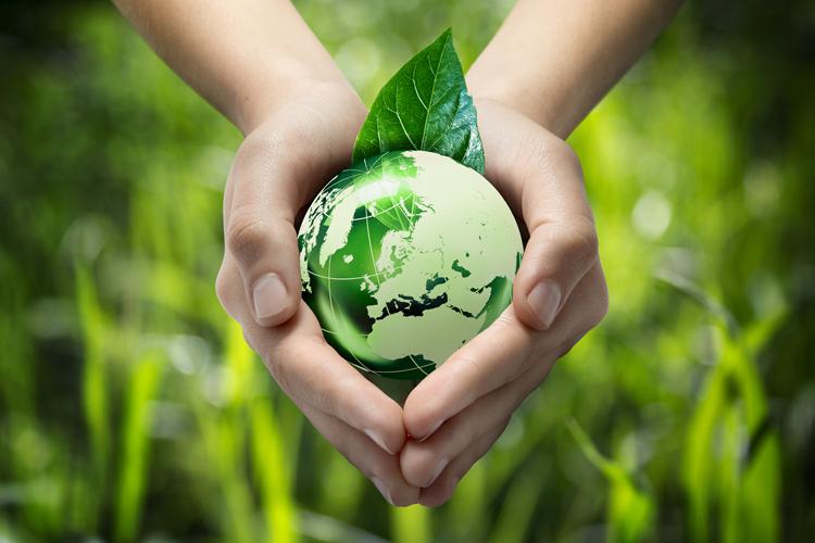 sostenibilidad ambiental, ganadería sostenible